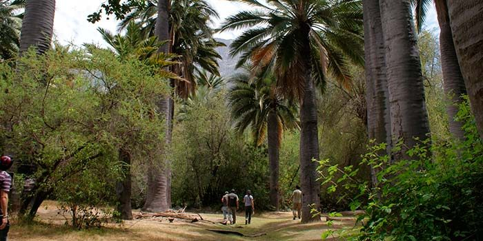 Parques nacionales de Chile cuentan con planes de manejo construidos con participación ciudadana