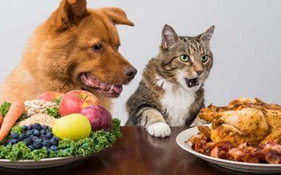 8 alimentos saludables y otros no tanto que son tóxicos para una mascota