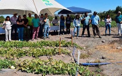 Con degustación de melones INIA Rayentué realiza el día de campo en cucurbitáceas