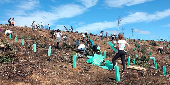 Fundación Reforestemos celebra re-forestación