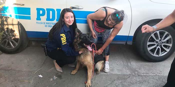 PDI recupera perro extraviado en Rancagua