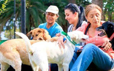 Seguridad pública de Rengo instalará stand informativo sobre registro de mascotas