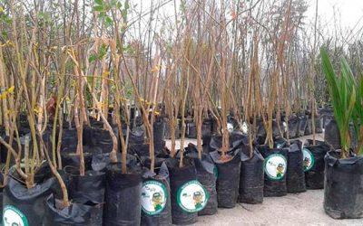 En Palmilla se ejecutará programa Más árboles para Chile