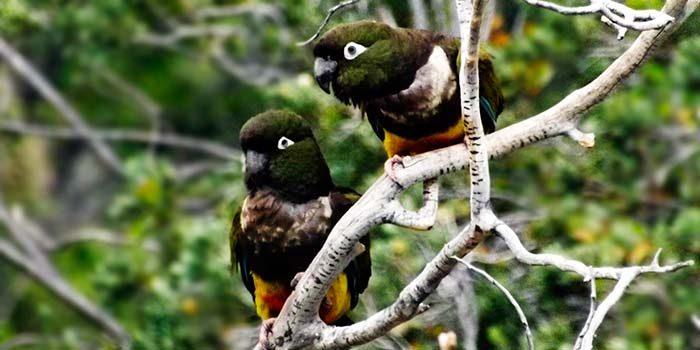 Conaf invita a conocer el patrimonio natural y cultural que se resguarda en parques nacionales