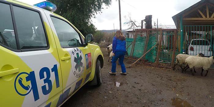 Inédito operativo médico permite auxiliar a pacientes con Insuficiencia Renal Crónica en Chacayes