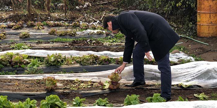 Entregarán apoyo a agricultores del secano costero afectados por la falta de agua y últimas heladas