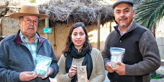 Cooperativa busca mercados para la quínoa que produce en el secano de la Región