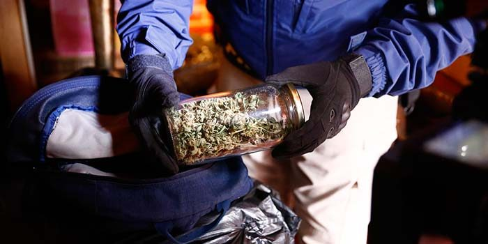 PDI de San Fernando detiene a sujeto por cultivo de marihuana en invernadero