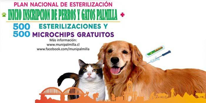 Programa de esterilización e instalación de microchips gratuito para mascotas en Palmilla