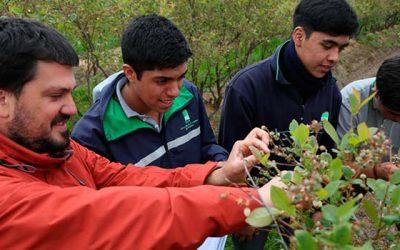 Proyecto busca optimizar el uso hídrico y energético en la producción de arándanos