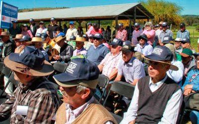 Seremi de Agricultura Aprobamos 230 millones para promocionar el cordero de la Región de OHiggins