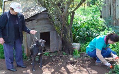 Seremi de Salud realiza en Lolol el primer muestreo ambiental canino de la comuna