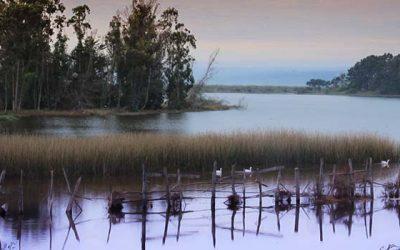 Amaro Gómez-Pablos llama a las autoridades a salvar el Humedal de Petrel en Pichilemu