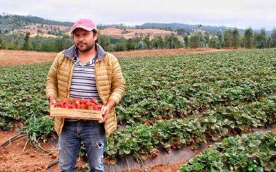 Director regional del Indap conoce emprendimientos de pequeños productores destacados de Lolol y Paredones