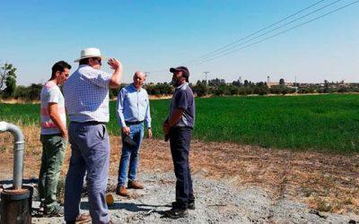 La conjunción de riego y clima hacen del secano de OHiggins un sector con gran potencial