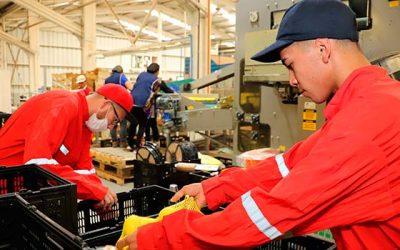 Los sectores productivos que explican el liderazgo económico de OHiggins tras último Inacer
