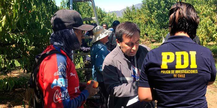 PDI detecta a 19 extranjeros trabajando ilegalmente en fundo de Malloa