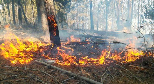 Controlado se encuentra el incendio en El Calvario