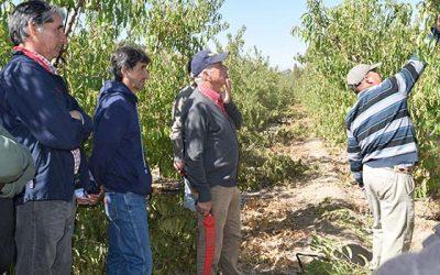 INIA y el Indap continúan apoyando a fruticultores de la Región