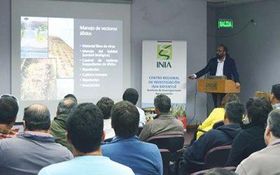 Profesionales de INIA buscan mejorar calidad y rendimiento en el cultivo del ajo