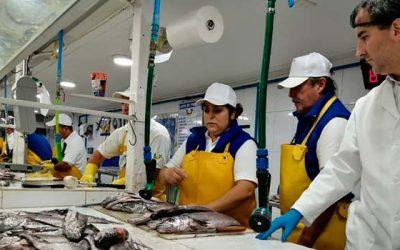 Seremi de Salud OHiggins lleva 8 mil kilos de pescados y mariscos inspeccionados