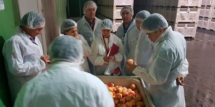 Anuncian nuevas oportunidades para productores de manzanas y cerezas