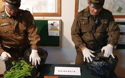 Carabineros de Pichidegua detuvieron a un sujeto por cultivo de Cannabis Sativa y tráfico de marihuana