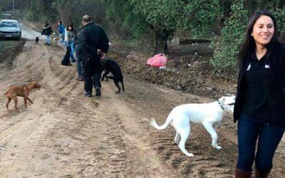 Segunda camada de perros callejeros serán entrenados por jóvenes internos del Sename de Graneros