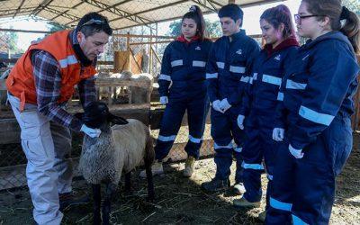 Estudiantes de Medicina Veterinaria UOH realizan prácticas formativas en la región