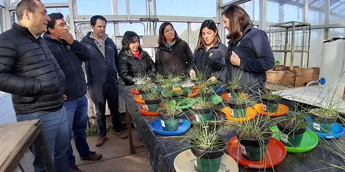 INIA trabaja para desarrollar fertilizante foliar usando nanotecnología