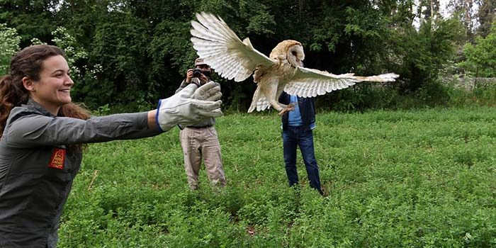 Parque Safari reinserta en la naturaleza 1 de cada 3 animales silvestres rescatados