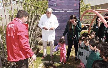 Plantación de árboles nativos en la Sexta Región