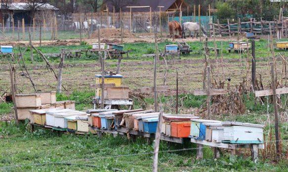 Ayuda para vecinos del sector rural de Rancagua afectados por la sequía