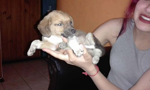 Municipio realiza denuncia por abandono de mascotas en Graneros