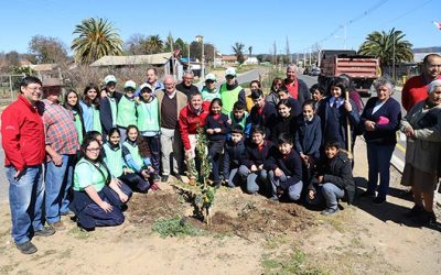 O'Higgins se sumó a la COP25 con la plantación simultánea de un árbol en las 33 comunas de la región