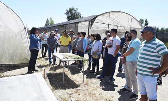 Con la utilización de plantas libres de virus otro futuro se prevé para el cultivo del ajo