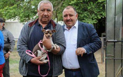 Municipio de Graneros realiza esterilizaciones gratuitas a mascotas