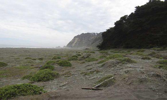 Nuevo hito de apertura de playa: se concreta acceso de Playa Tanumé en O'Higgins