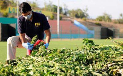 PDI adopta procedimiento tras hallazgo de droga por parte de un gendarme