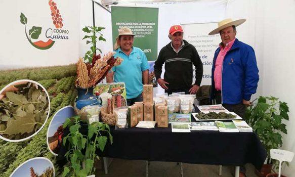 Proyecto interdisciplinario de la universidad católica impulsa innovación alimentaria a base de quínoa