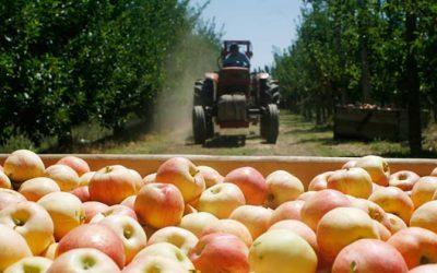 Trabajadores de industria frutícola reciben certificación del Estado de Chile