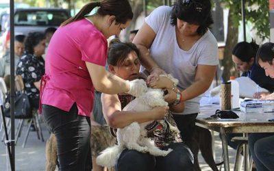 Veterinario en Terreno implantó microchip a más de 50 mascotas de Lolol