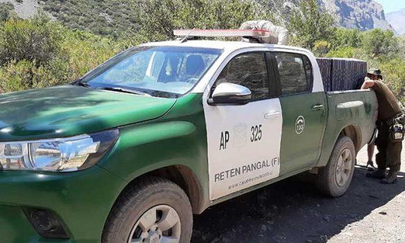 Carabineros rescató cóndor en el sector cordillerano de Las Leñas