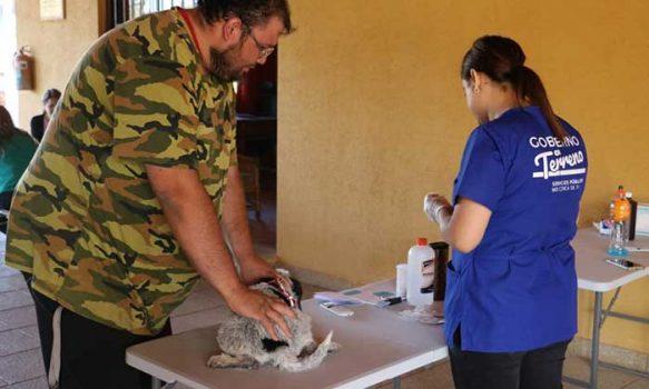 Cerca de 300 mascotas de Pumanque recibieron chip de identificación