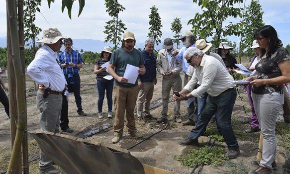 INIA presentó selecciones promisorias de cerezos y comportamiento agronómico de nuevos portainjertos para nogales