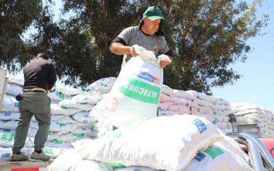 Gobierno entrega forraje a agricultores de Las Cabras y Peumo afectados por la sequía