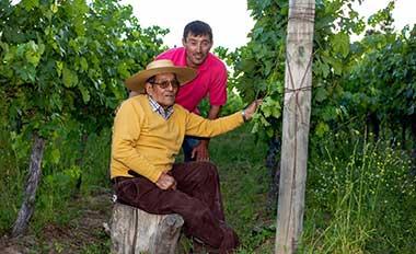 Asociatividad logra exportación de vinos patrimoniales de Colchagua