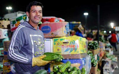 Pequeños agricultores de O'Higgins continúan abasteciendo al país gracias a convenio Indap-Lo Valledor