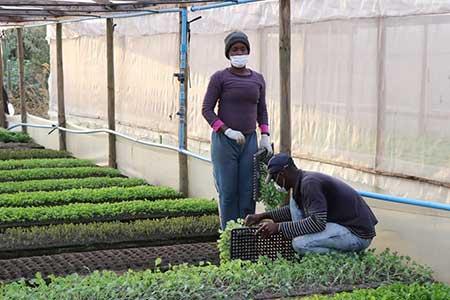Destacan ejemplo de agricultores de O'Higgins que siguen produciendo alimentos para el país