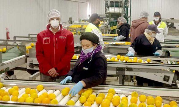 La producción de alimentos se mantiene segura